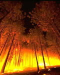 Forestfire_TH